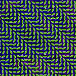 by Animal Collective